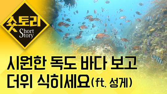 [숏토리] 시원한 독도바다 보고 더위 식히세요(ft. ....