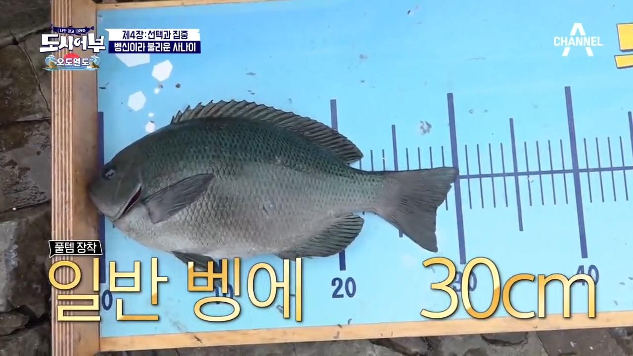 ↖압도적인 실력↗ 벵에돔 7연타를 기록하는 박 프로ㄷㄷ....