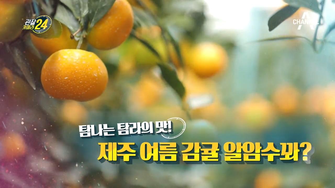 관찰 카메라 24 96회