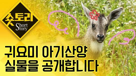 [숏토리] 서울대공원에서 아기산양이 태어났어요