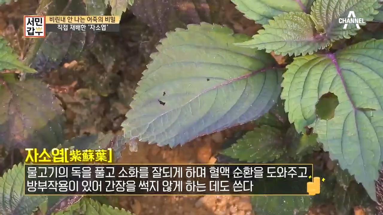 ※어죽 맛의 숨겨진 비밀※ 수상한 보라색 가루의 정체는....