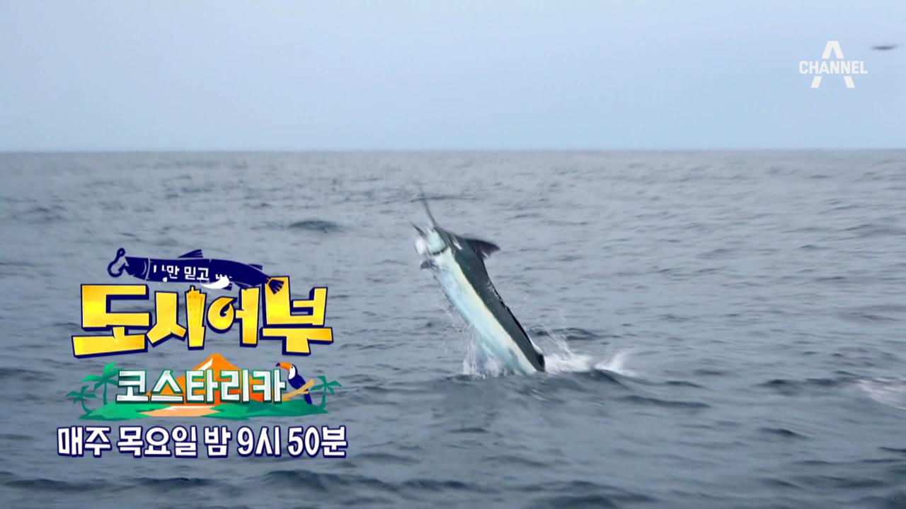 [예고] 코스타리카 3탄! 마침내 찾아온 기회 '청.새....