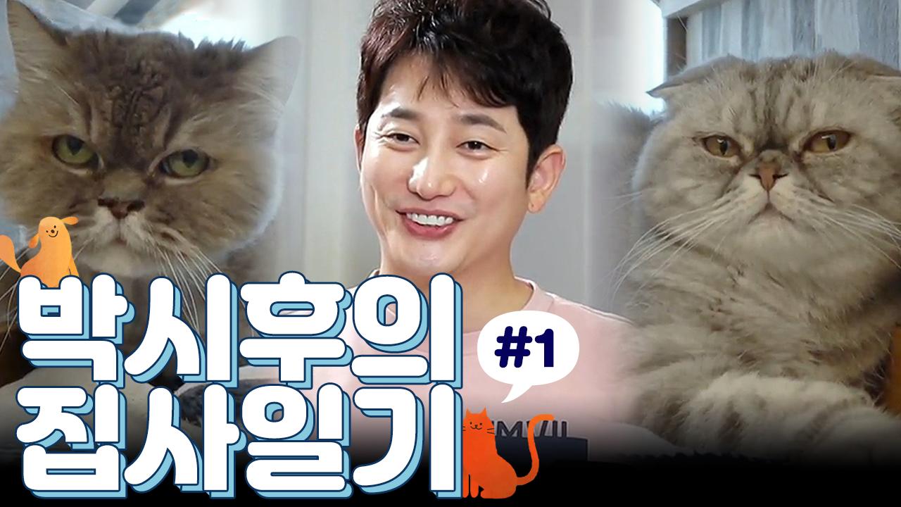 [집사일기] 한류 프린스 박시후의 귀염뽀짝 고양이 다미....