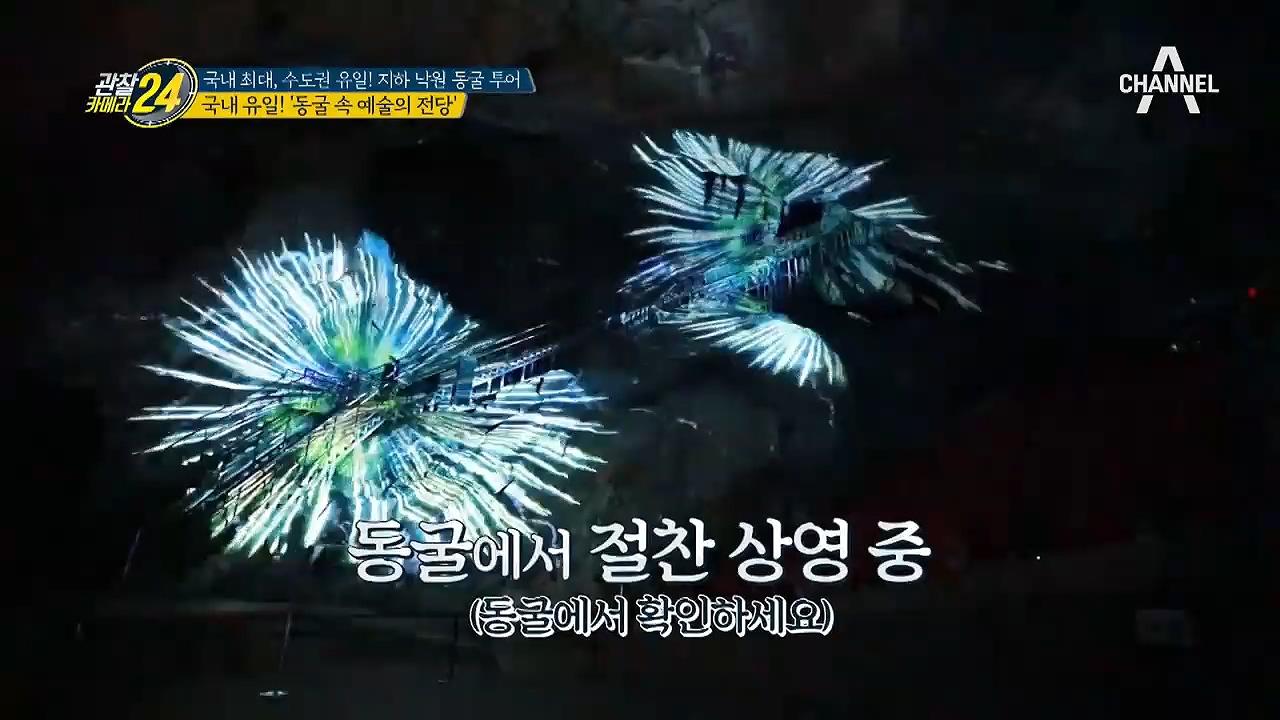 [국내 유일] 동굴 속에서 *영화*를 본다!? 동굴 속....