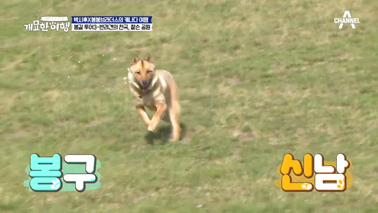 ♥개신남♥ 시골견 봉구 ㅜㅜ견생 9개월 차에 진정한 자....