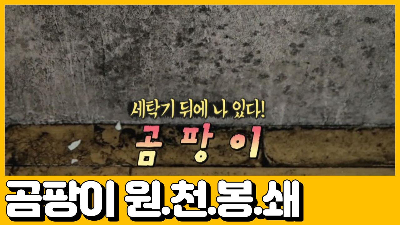 [선공개] 곰팡이 원.천.봉.쇄. 갑부만의 단열 시공 ....