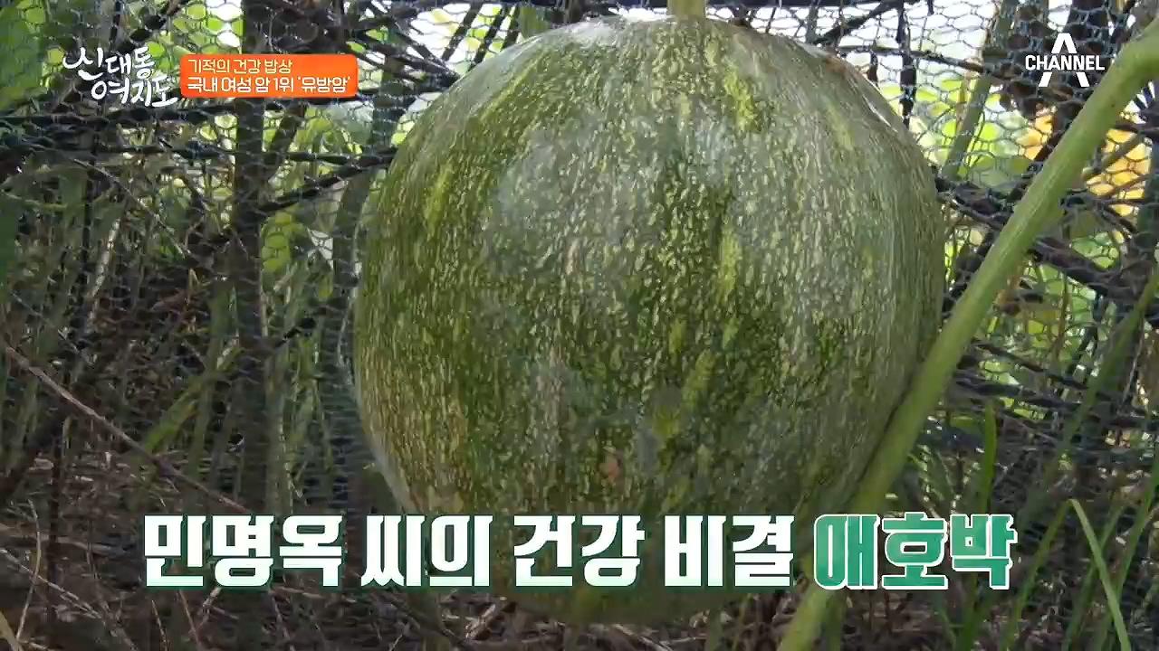 유방암을 이겨낸 비결. 애호박?!