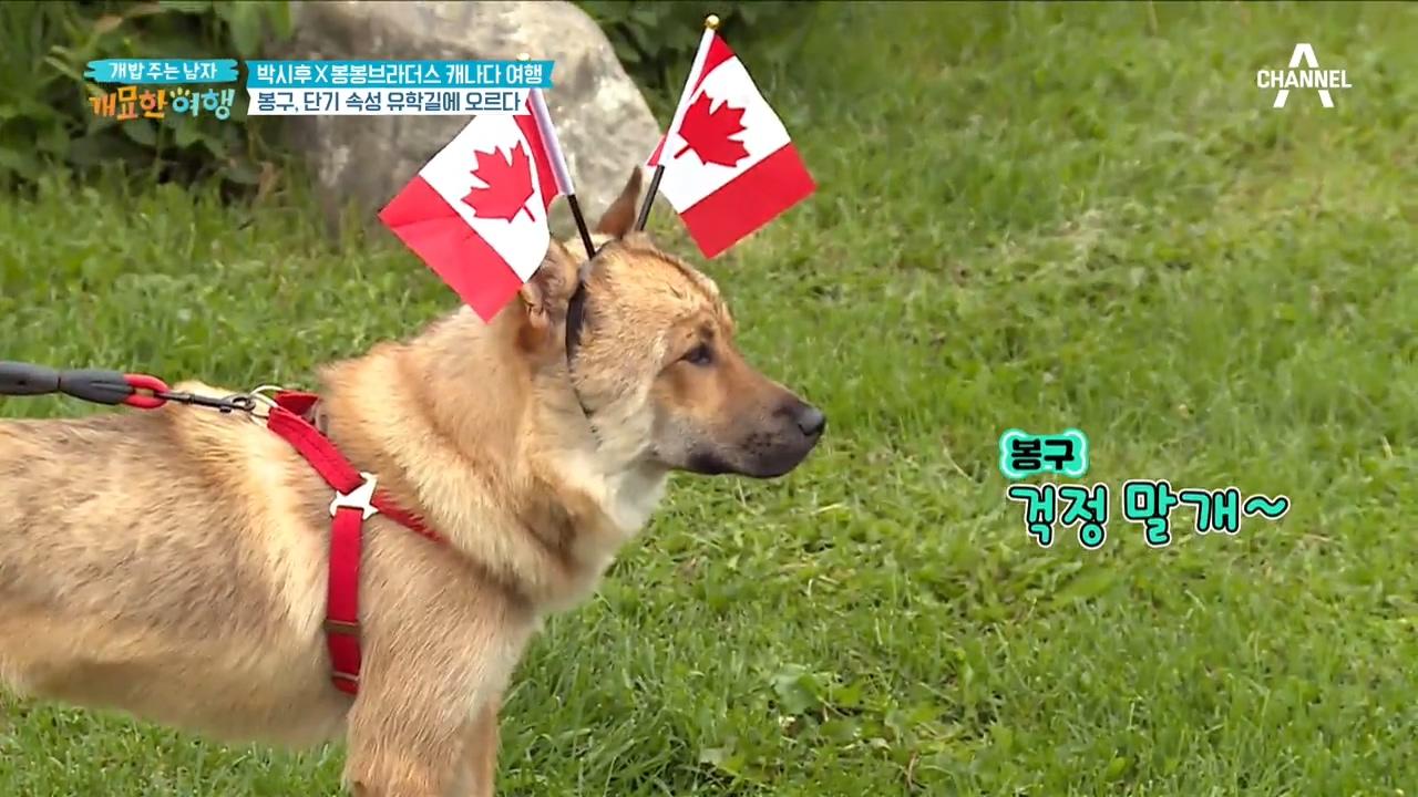 시골犬 봉구! 캐나다 단기 속성 유학길에 오르다?!