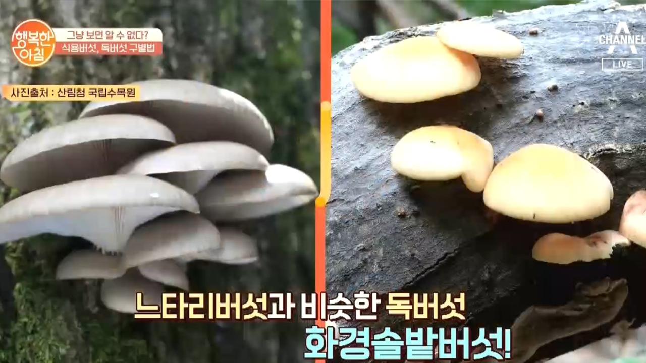 가을철 식용버섯과 독버섯 구분하는 방법! 버섯을 잘라서....