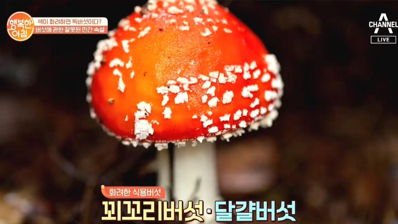 색깔이 화려하지 않은 버섯은 먹어도 된다? [YES o....