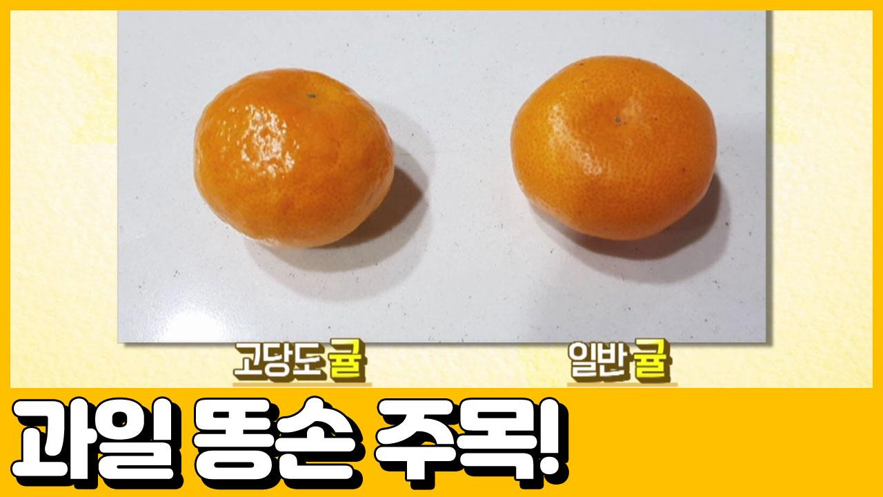 [선공개] (꿀팁전수) 귤 못 고르는 똥손들 주목! 인....