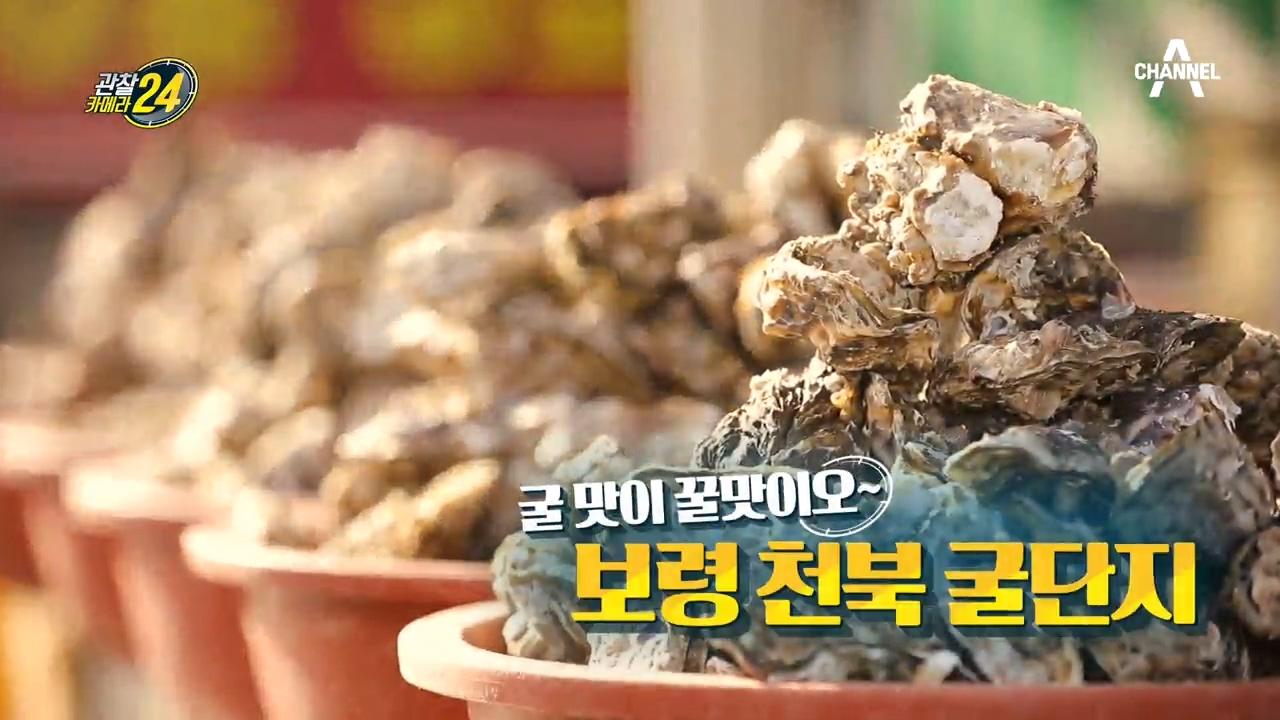 관찰카메라 24 116회