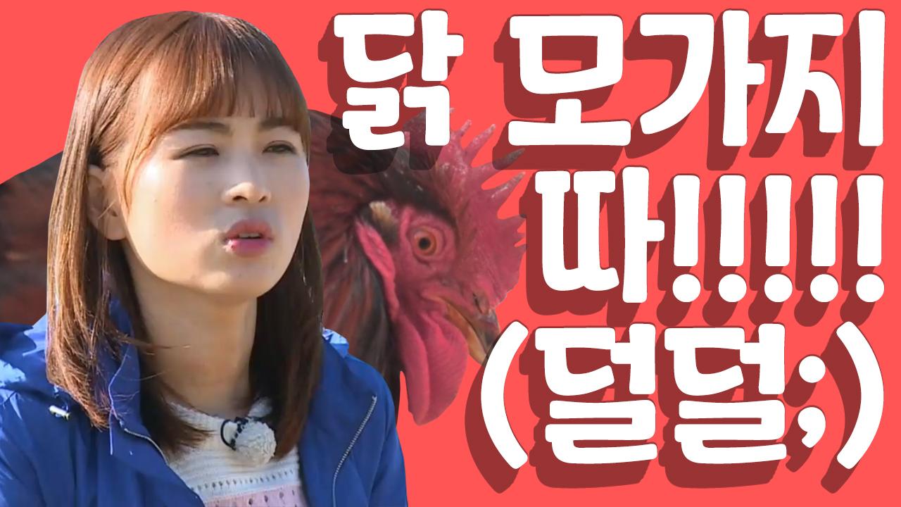 [세이하이 탈북미녀] 거친女子 북한미녀들! 닭을 거꾸로....