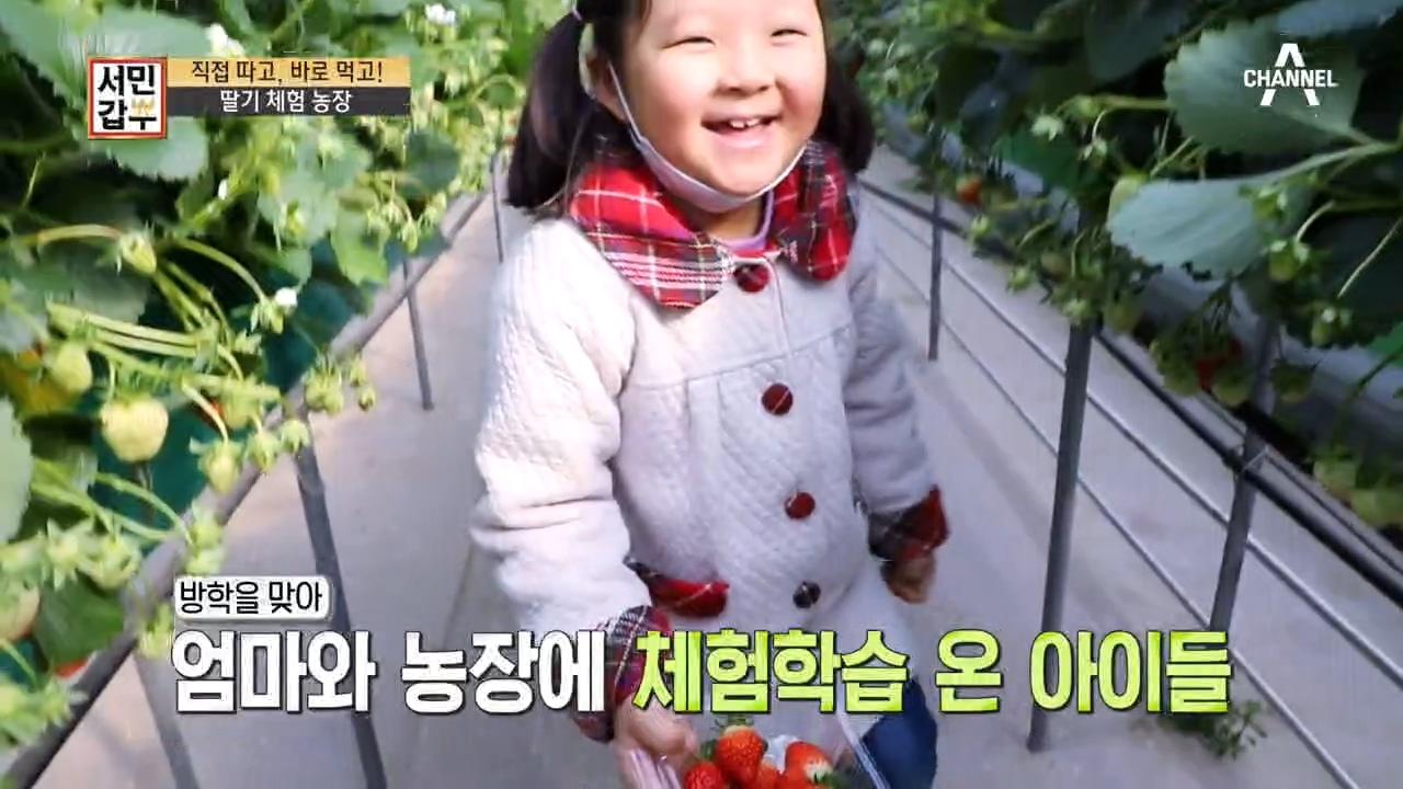 (츄릅♥) 직접 따고, 바로 먹고! 딸기 농장 체험학습....