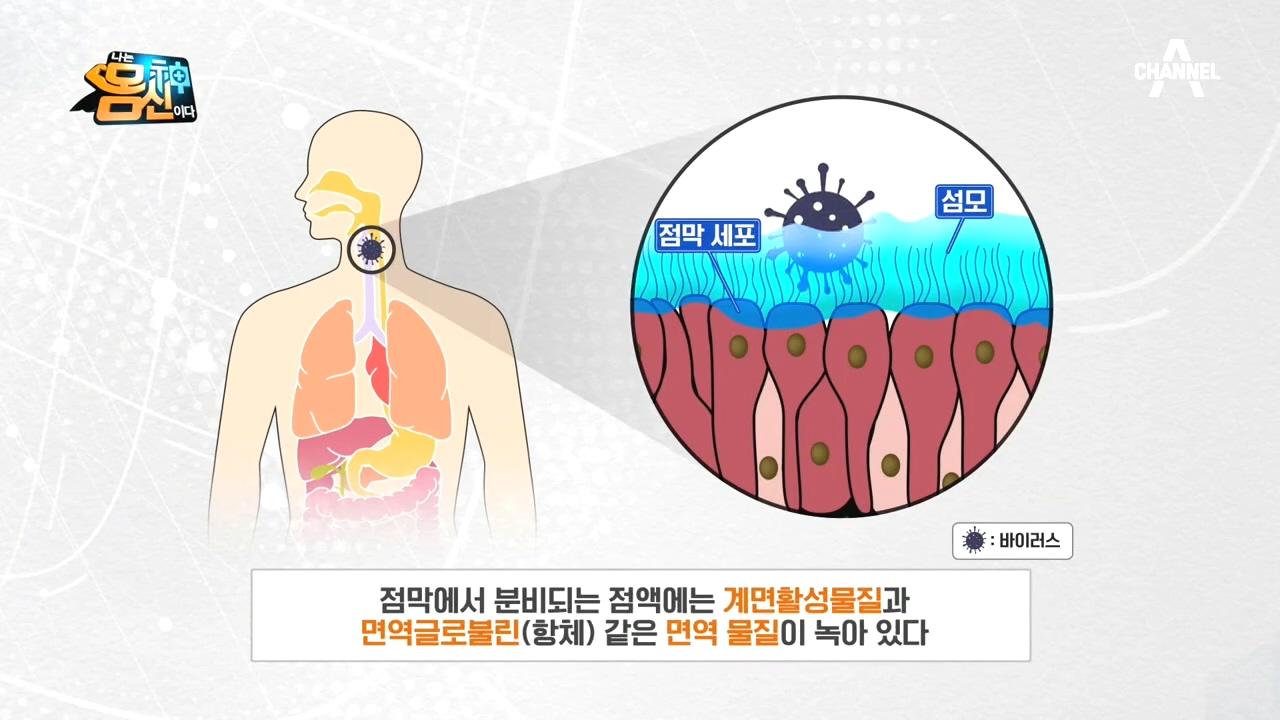 호흡기의 *점막 면역*, 점막 자체에서도 면역 물질을 ....