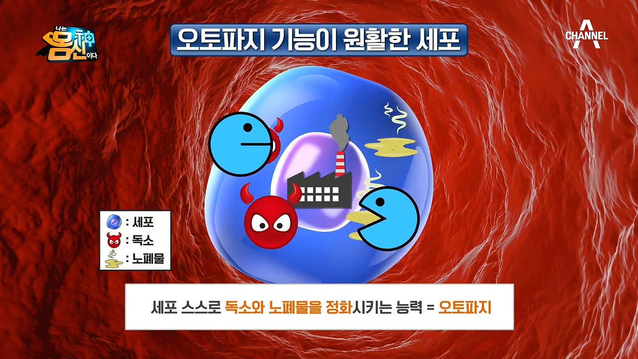 2020 봄맞이 세포 대청소! 세포 해독 프로젝트 '오토파지'