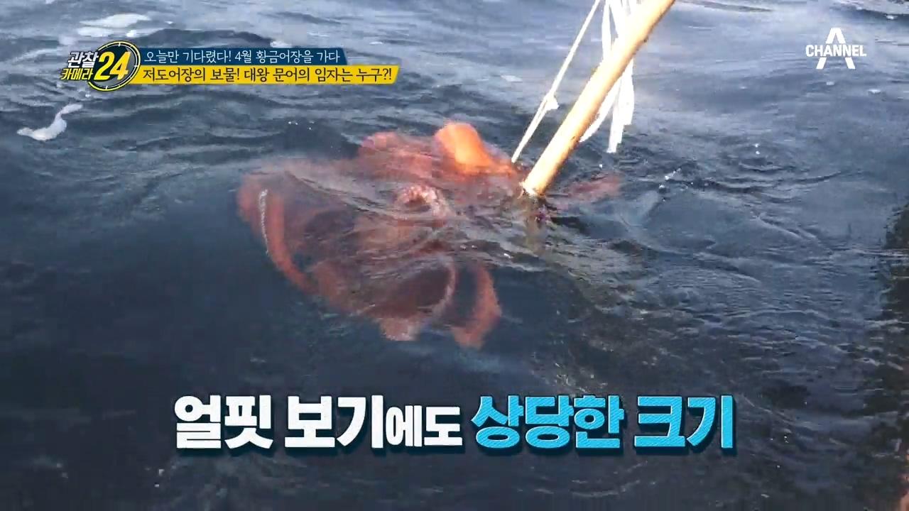 관찰카메라 24 134회