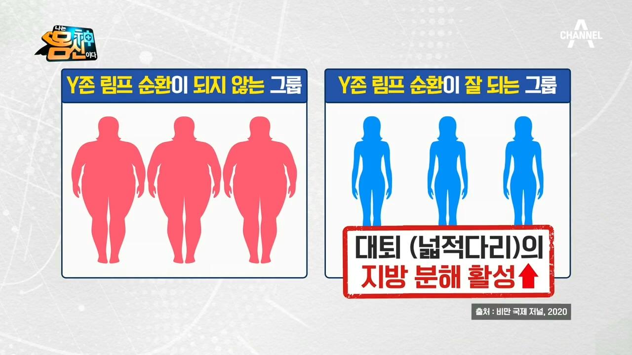 ※다이어트를 돕는 원활한 순환※ 림프 순환의 핵심! 'Y존 다이어트'