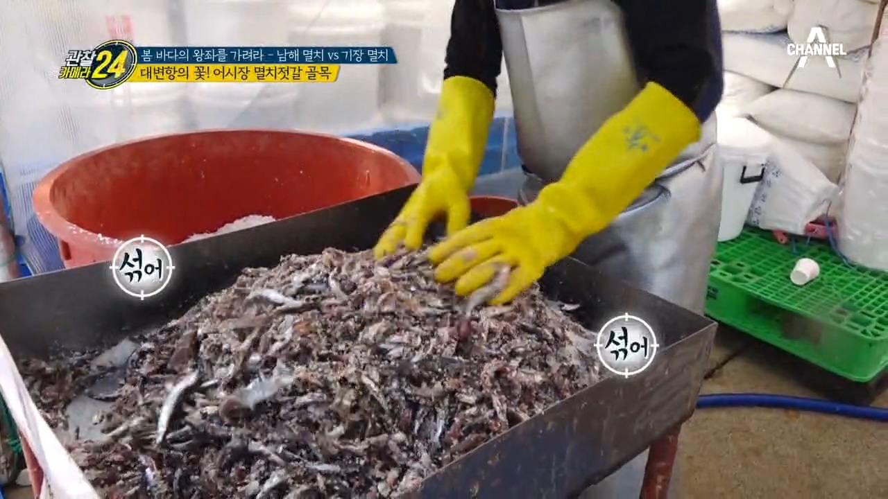 대변항의 꽃~* 어시장 멸치 젓갈 골목?!
