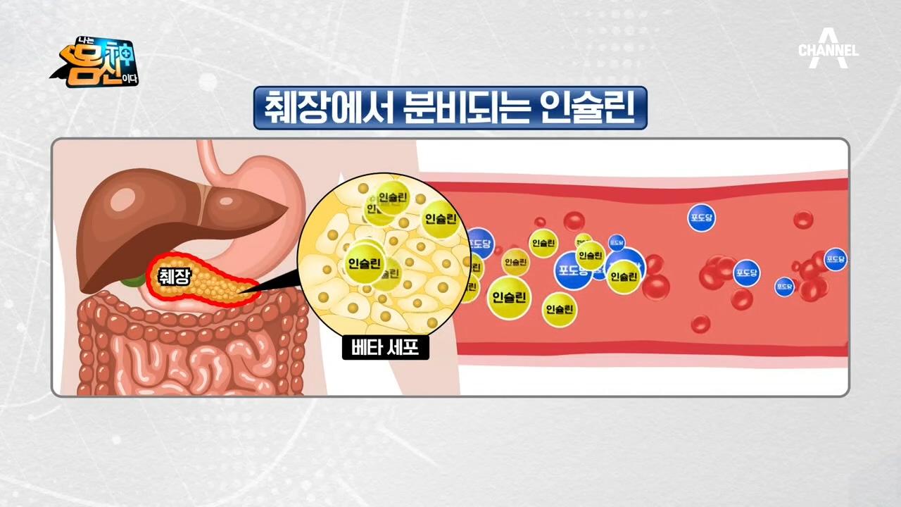 한번 다치면 재생되지 않는 췌장?! 인슐린이 우리 몸에....