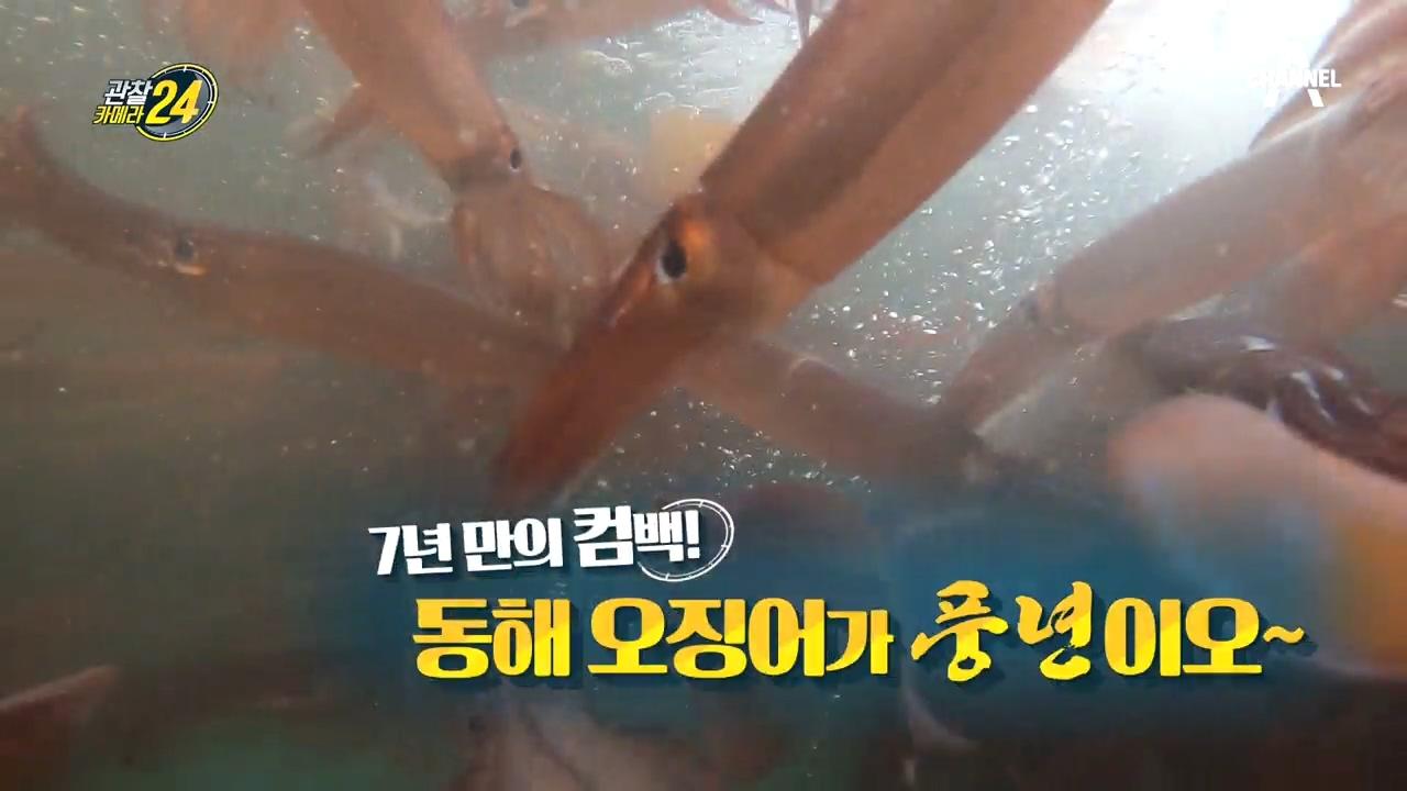 관찰카메라 24 146회