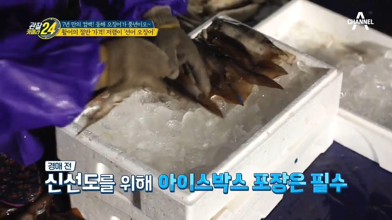 ※눈 깜짝할 새 완판※ 활어의 절반 가격인 '선어 오징....