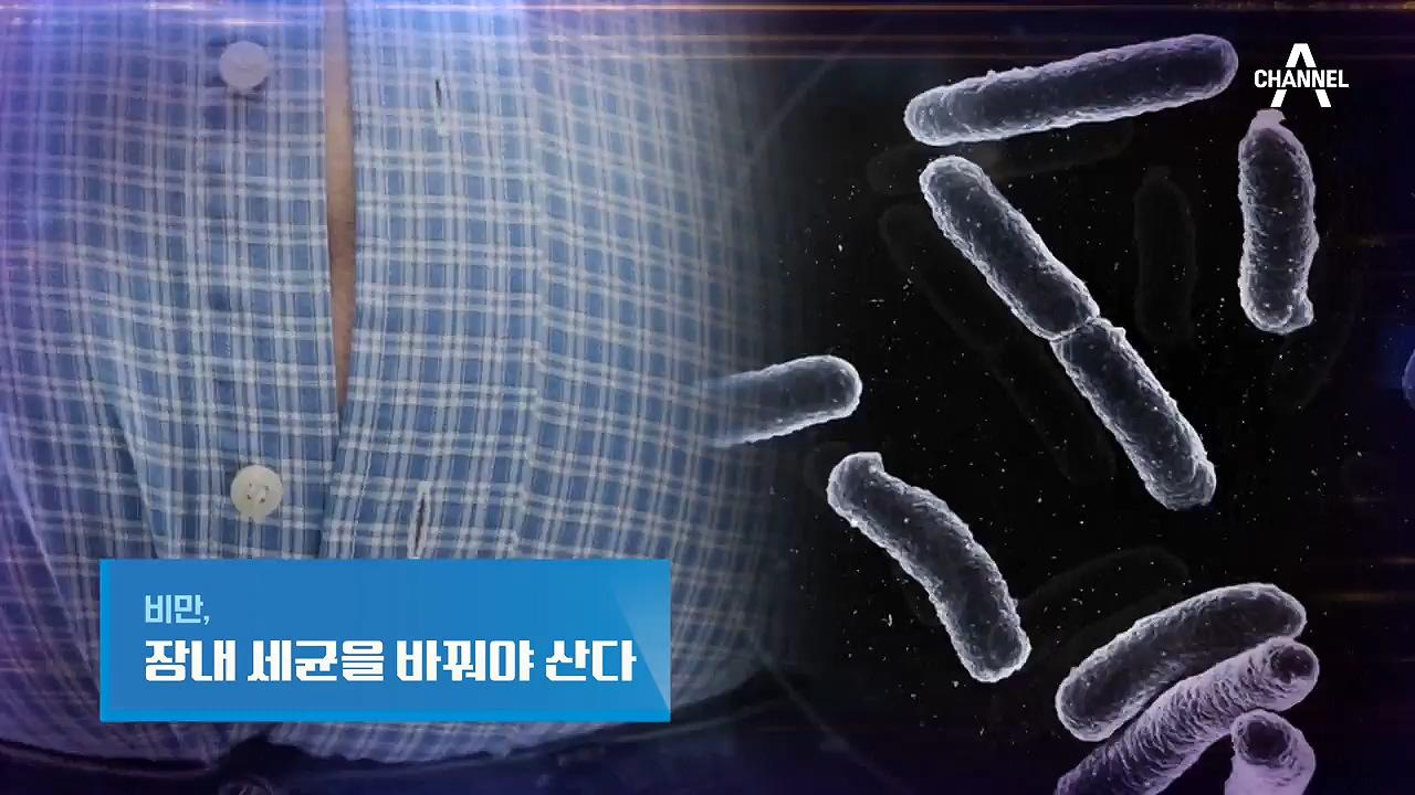 특별기획 비만, 장내 세균을 바꿔야 산다