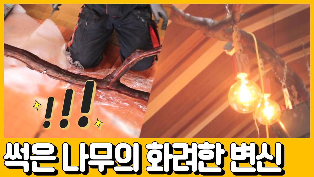 [선공개] 갑부 보물의 정체가 '썩은 나무'? 썩은 나....