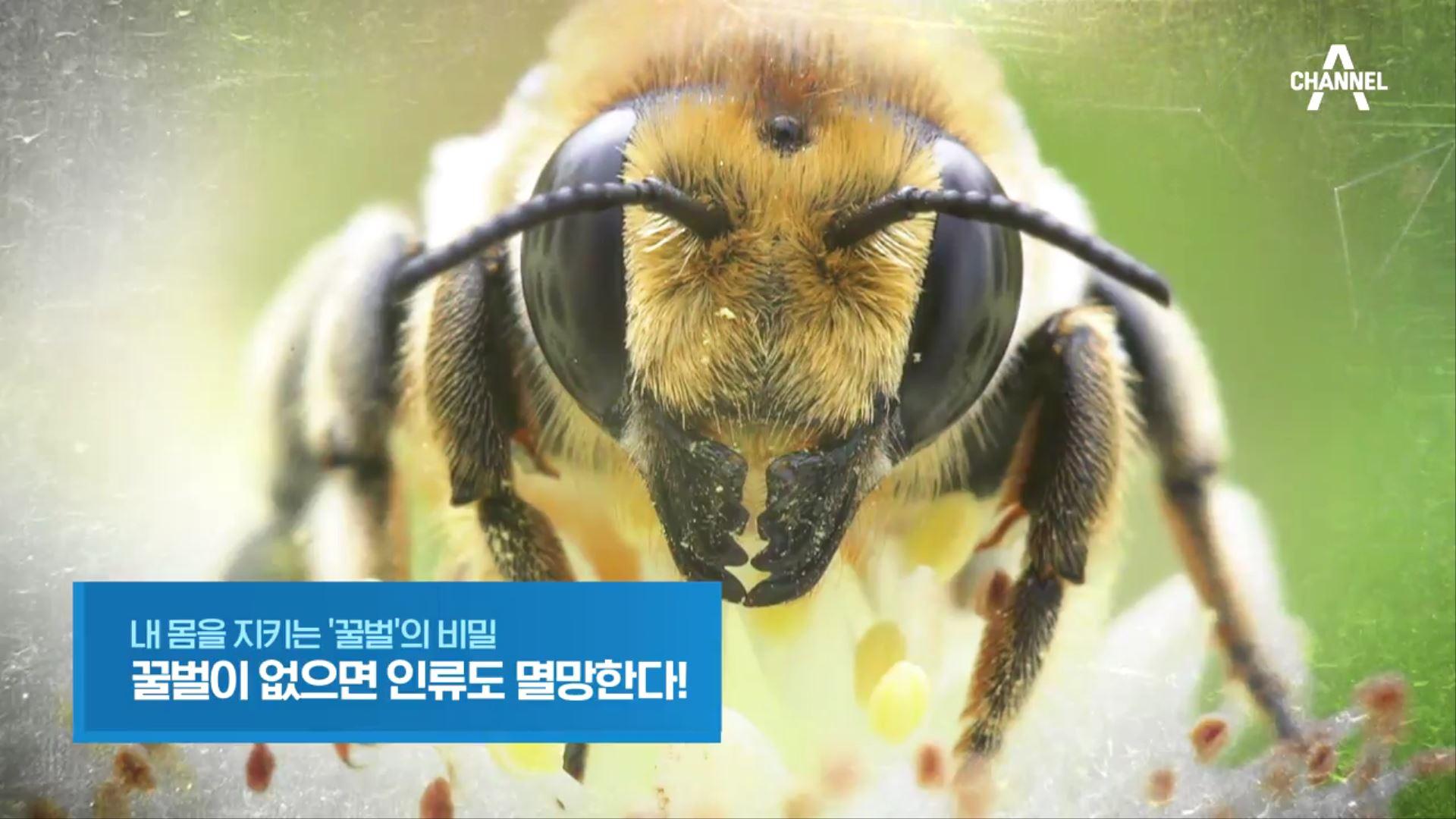 특별기획 내 몸을 지키는 '꿀벌'의 비밀