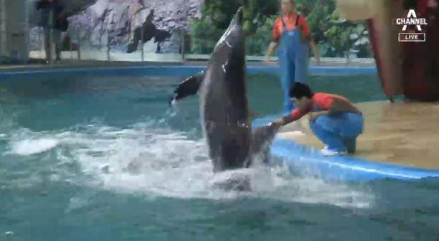 [뉴스 톡톡톡]돌고래쇼 퇴출…수입 막는다