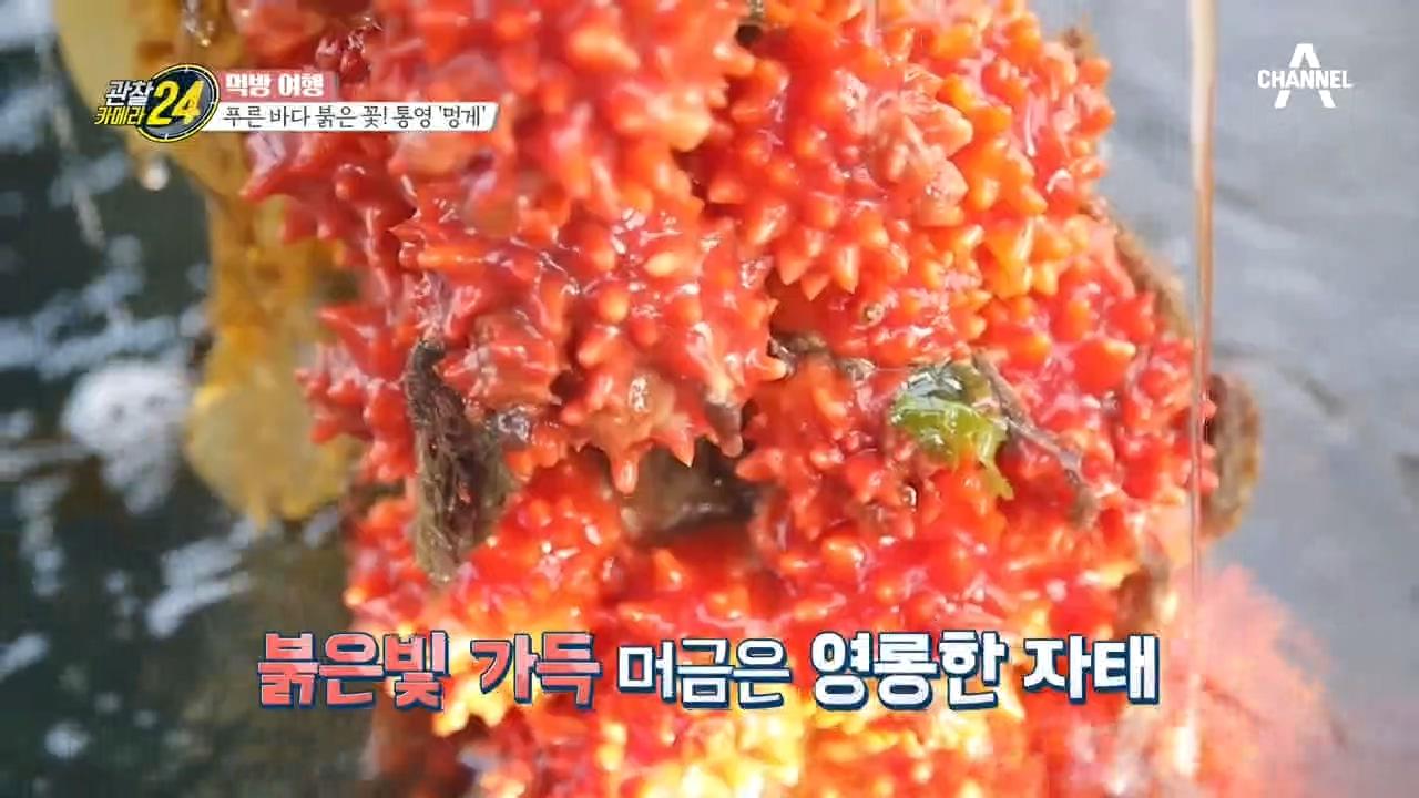 푸른 바다의 붉은 꽃♥ 통영에 핀 꽃 '멍게'