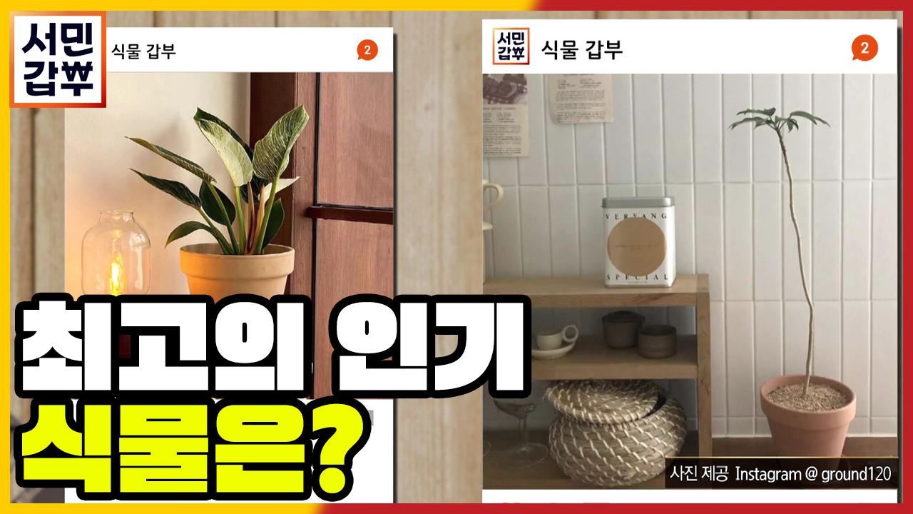 [선공개] 플랜테리어가 각광받는 시대! 식물 갑부 온실....