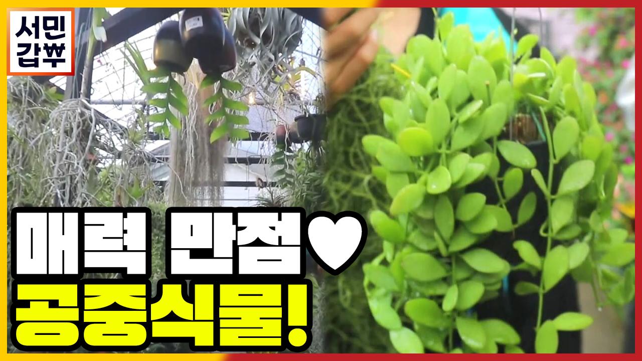 [선공개] 봄맞이 플랜테리어! 아무 데나 '툭' 걸어놔....