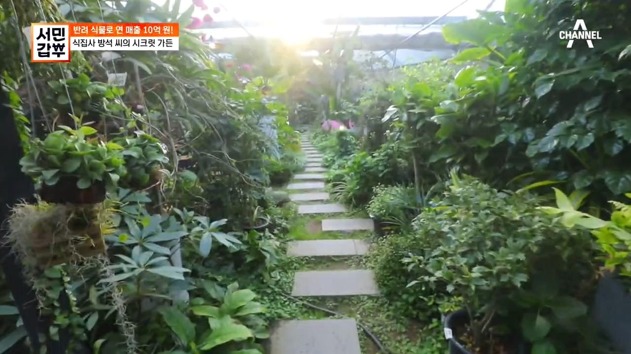 *눈 정화* 온갖 푸른 빛 식물들이 즐비한 이곳, 갑부....