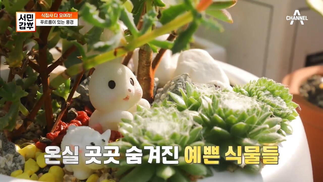 ♡.♡ 갑부가 만든 힐링 스페이스~* 천고 12m의 초....