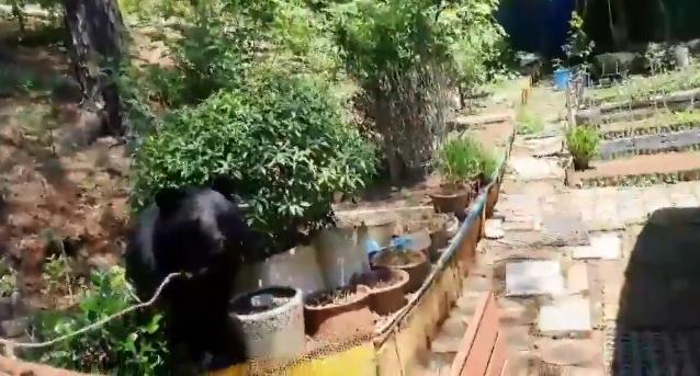 울산서 민가에 반달가슴곰 출현…마취총 쏴 포획