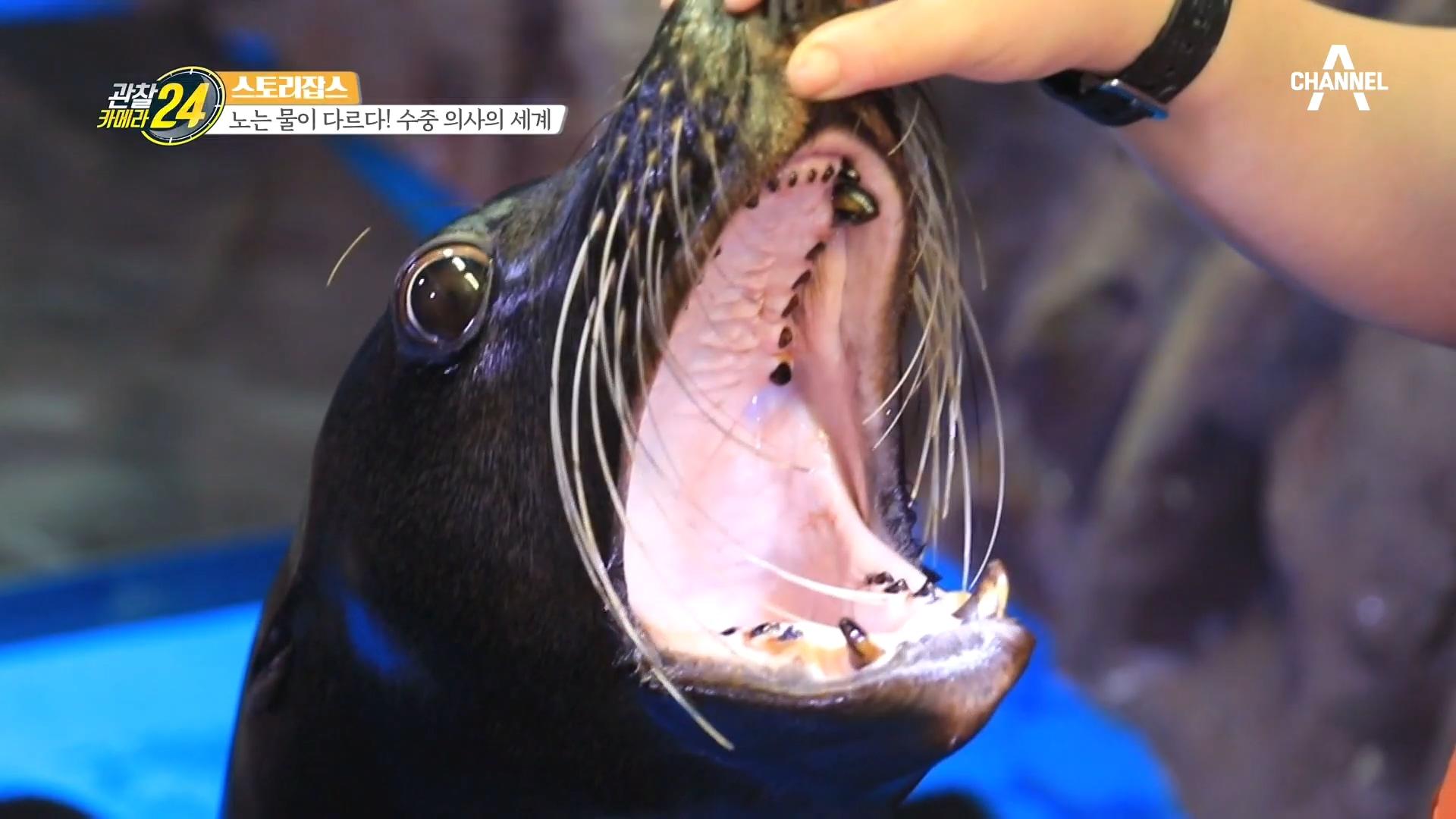 '소독부터 연고까지!' 남다른 애정으로 바다동물을 치료....