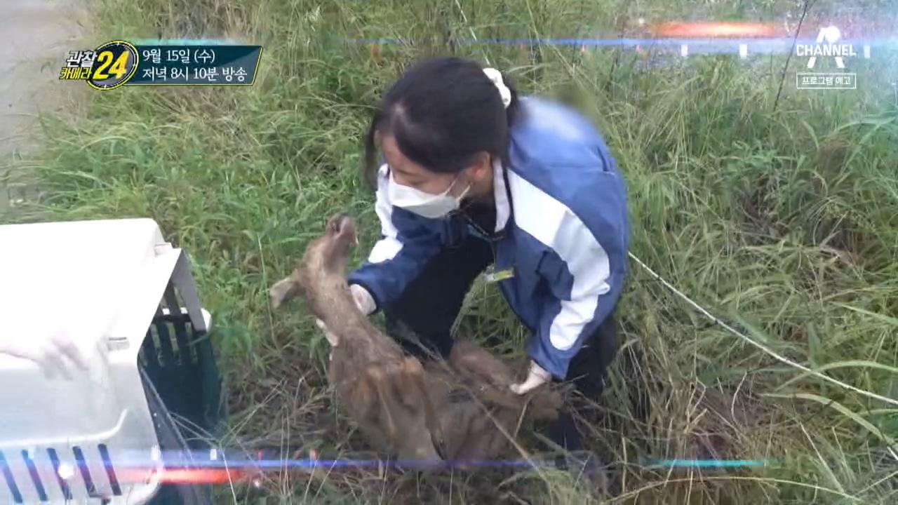 [예고] 위기에 처한 동물을 구하라, 야생동물재활사!