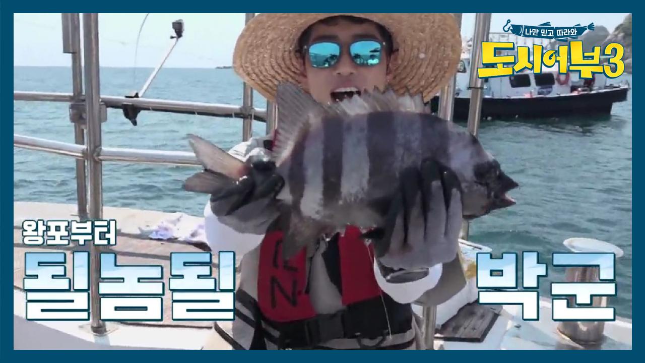 ★톨 앤 머슬 돌돔 35CM 히트★ 정,확.조.준. 박....