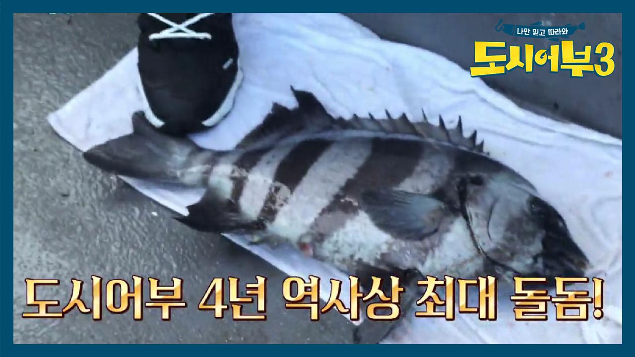★도시어부 4년 역사상 최대 돌돔★ 낚시 종료 5분전 ....