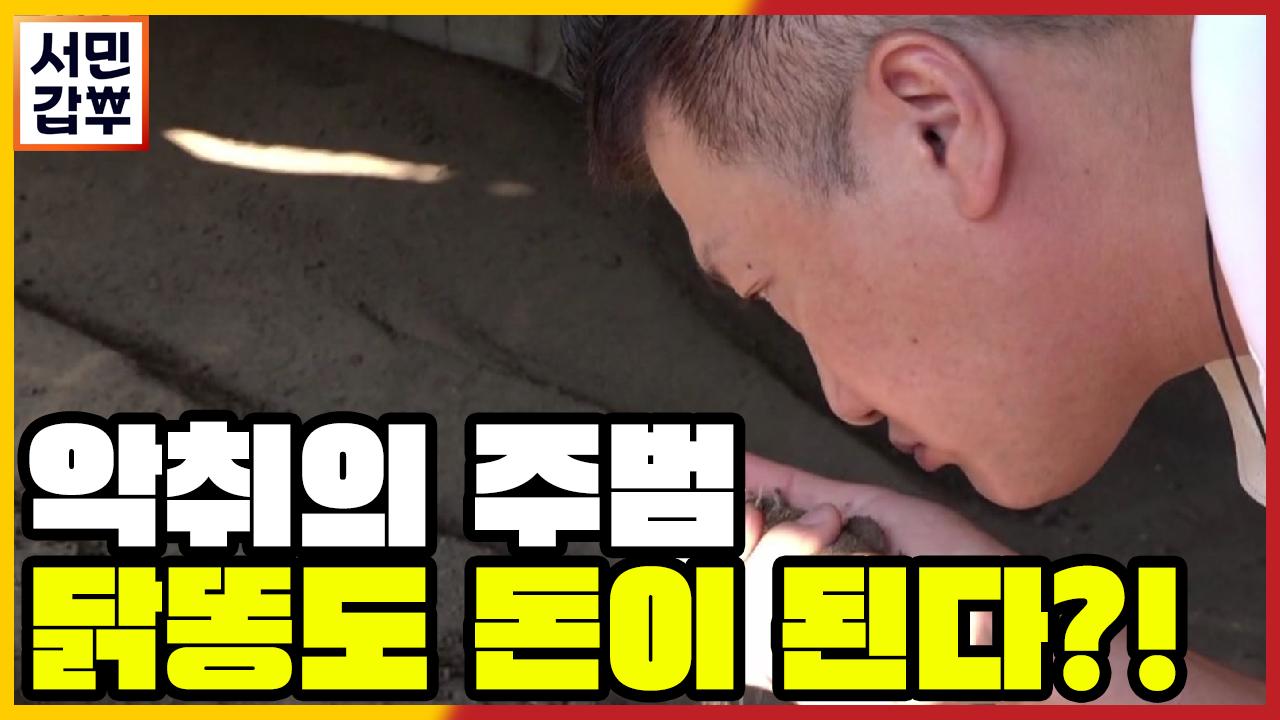 [선공개] 닭똥도 돈이 된다? 닭똥을 재활용 했더니 부....