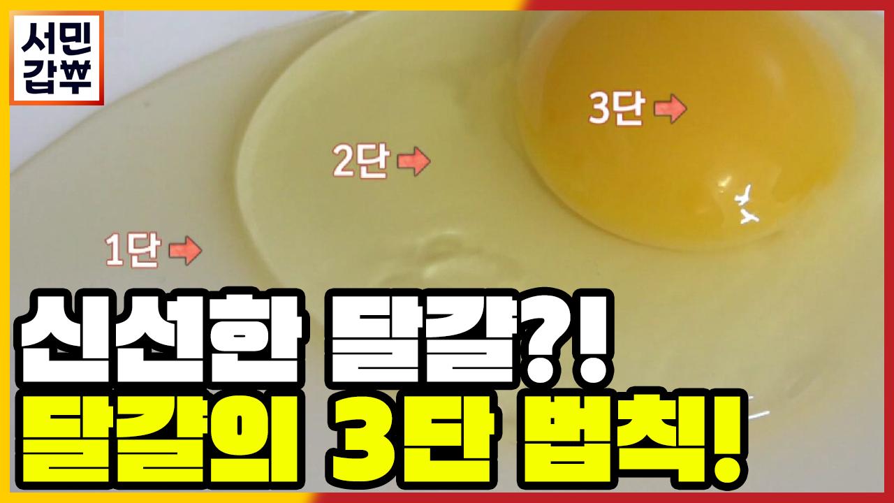 [선공개] 신선한 달걀을 확인하는 법, 달걀의 3단 법....