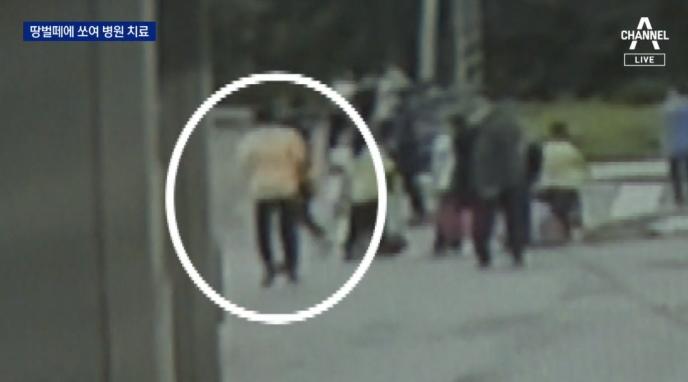 야산서 체험학습하던 초등생 48명 '벌떼 습격'