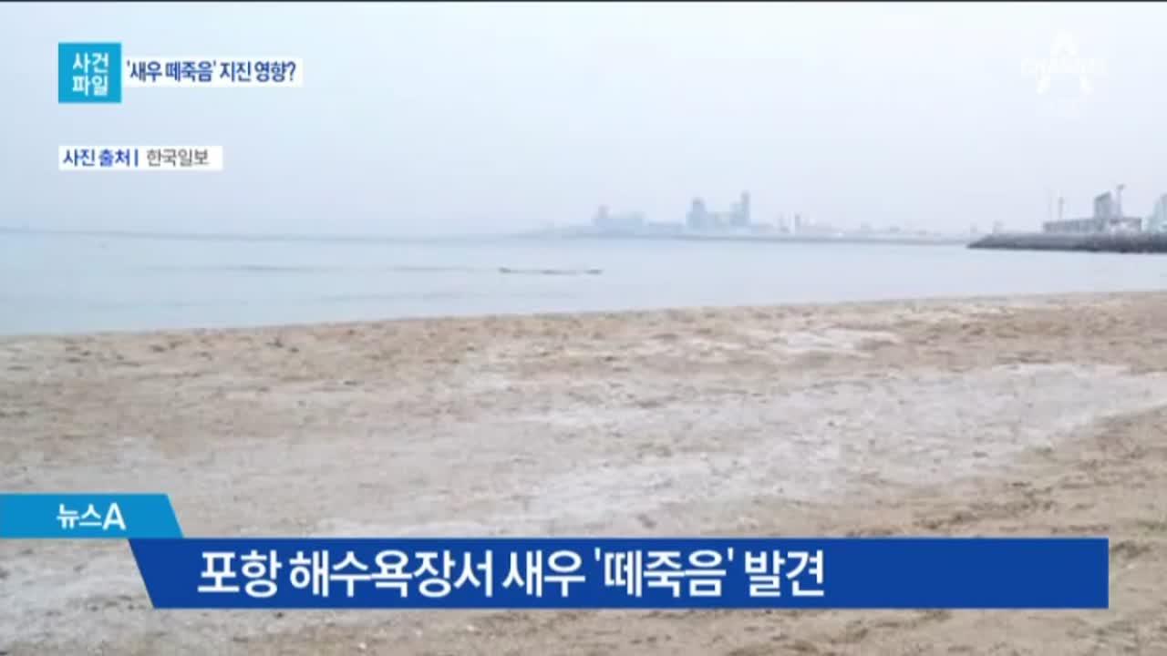 [사건파일]포항 새우 떼죽음 발견 外