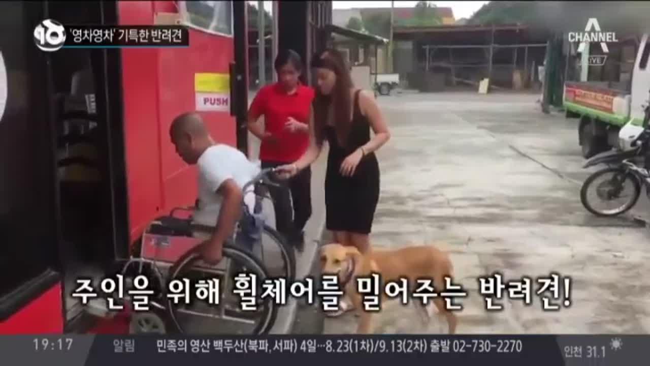 '영차영차' 기특한 반려견