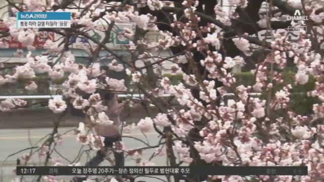봄꽃 피니 상춘객 '북적'…감염 터질라 '끙끙'