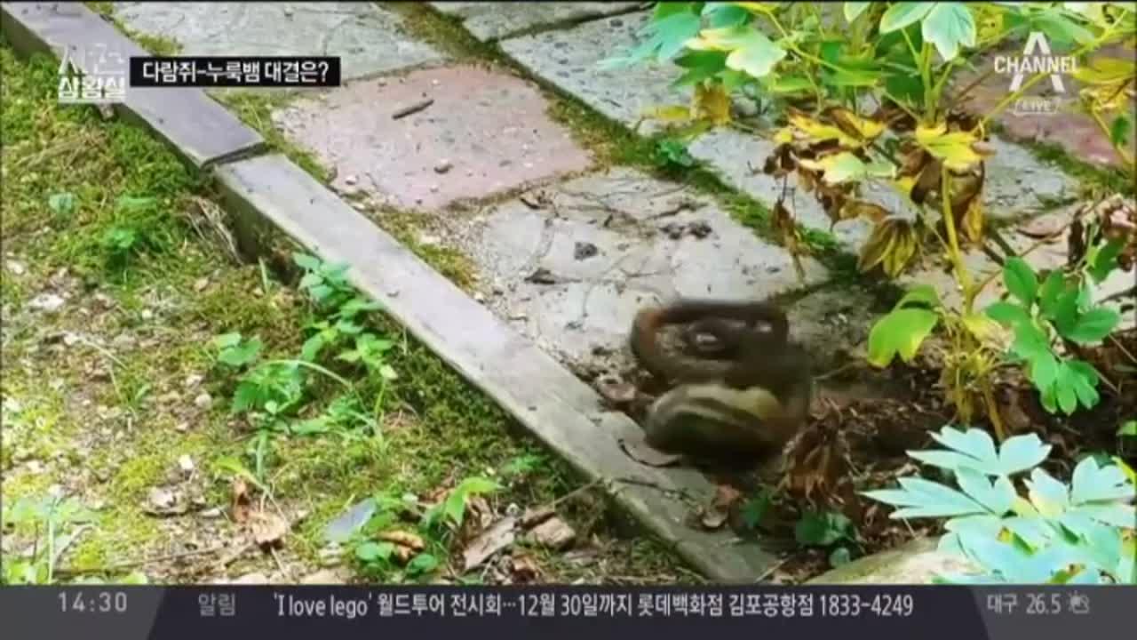 [사건바코드]다람쥐와 누룩뱀의 한판 승부