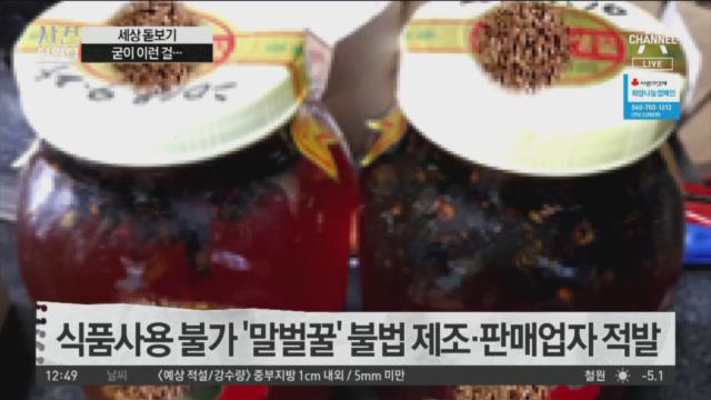 식품사용 불가 '말벌꿀' 불법 제조·판매업자 적발