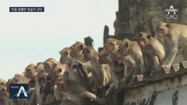 """관광객 사라지자 원숭이들이 점령…""""공격할까봐 눈 못 떼...."""