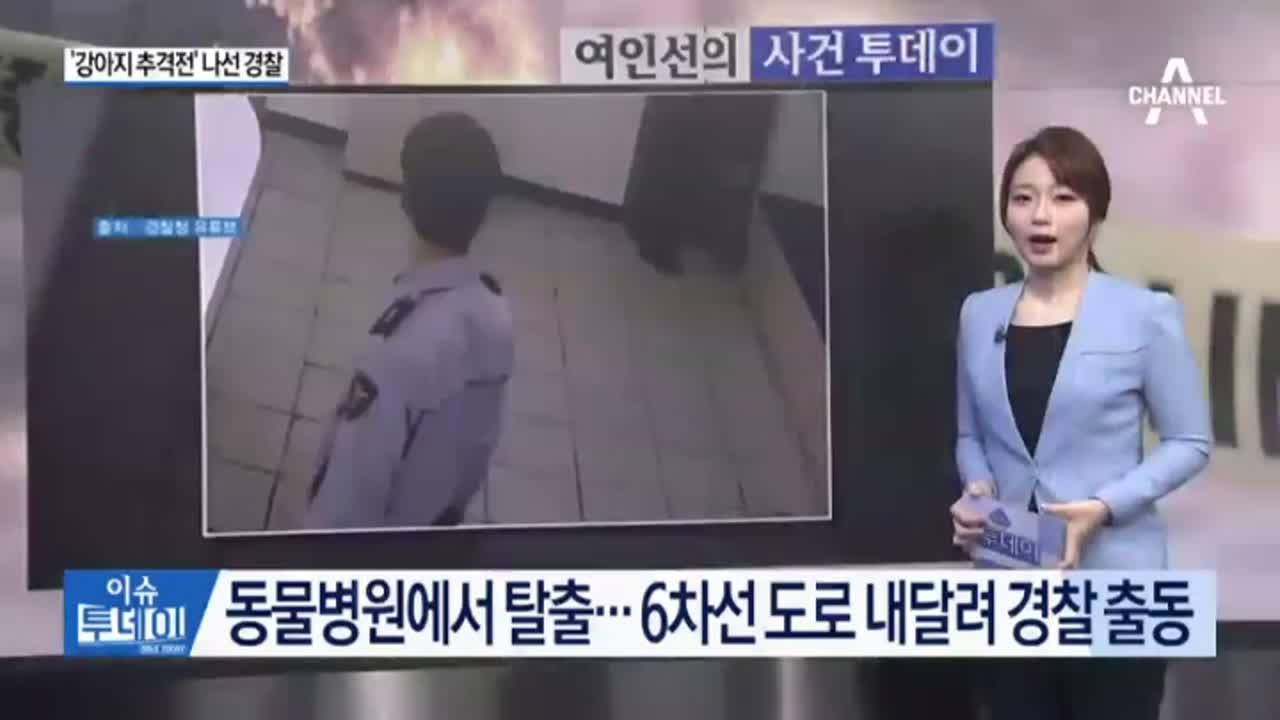 [사건투데이]경찰관들, 퇴근 시간대 '강아지 추격전'